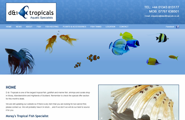 D & I Tropicals ~ Moray's Tropical Fish Specialist